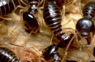 Crawling Insect Killers