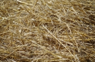 Bedding, Bales (Straw & Hay) & Tray Liners