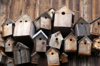 Bird Nesting Boxes, Feeders & Accessories