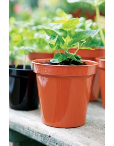 Stewart Flower Pot Terracotta 8