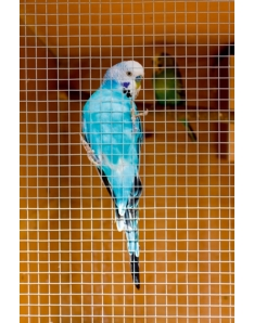 Ambassador Cage & Aviary Welded Panel 6x6mm 6x0.9m